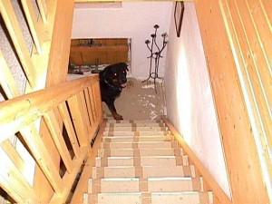 Stiegenaufgang-mit-Ben